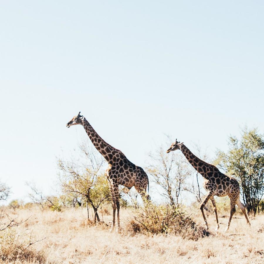 rocky-valley-safari